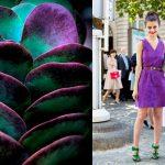 Сочетания цветов: фиолетовый и зеленый